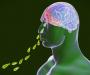 """Алармантно: Уште една бактерија која го """"јаде"""" мозокот"""
