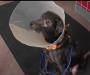 Ова е Адам – Kучето кое е алергично на луѓе